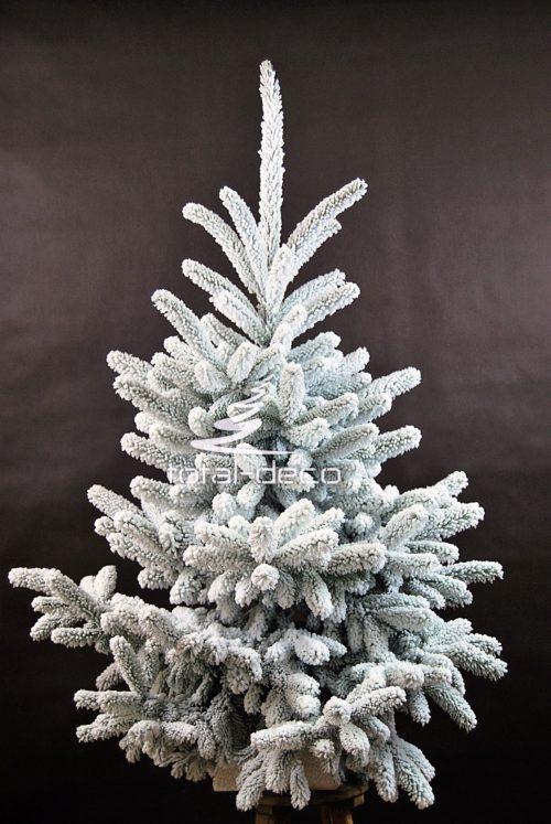 Żywa naturalna choinka ośnieżona na biało piękna i dostojna pachnąca świętami i lasem duża i szeroka