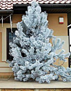 dekoracje świąteczne na zewnątrz